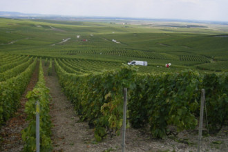Marne (Champagnestreek)