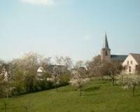 Haspengouw