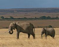 Zuid-Kenia