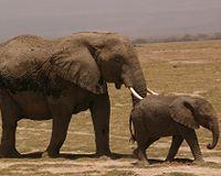 Natuurreservaten in Zuid-Kenia